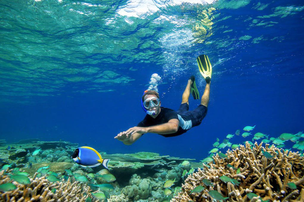 coral, snorkelling, The Maldives, coral farming, coral garden, coral conservation