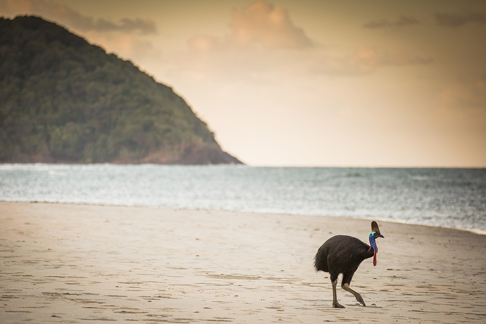 Cape York, Cassowary, Queensland, Cape Tribulation