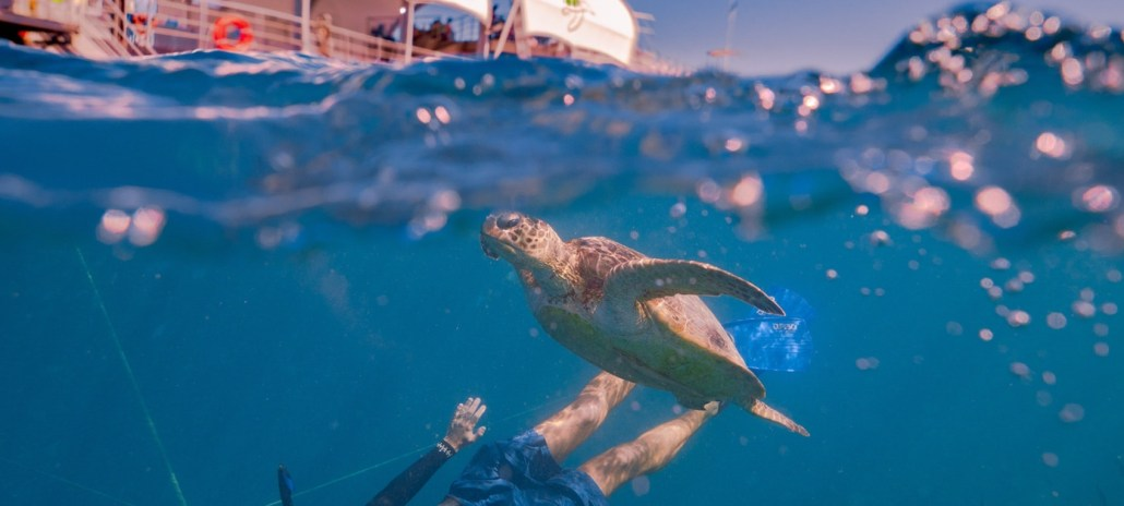 Cruise Whitsundays, Reefworld, snorkelling, Great Barrier Reef