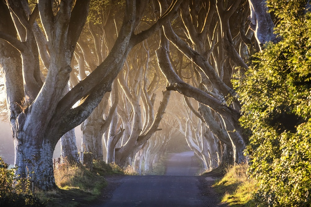 Game-of-Thrones®-The-Dark-Hedges - The-Kingsroad