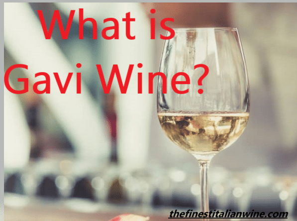 What is Gavi Wine?
