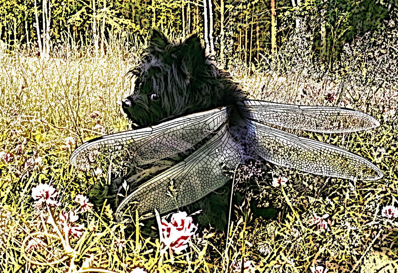 cema dog with dragonfly wings graphic