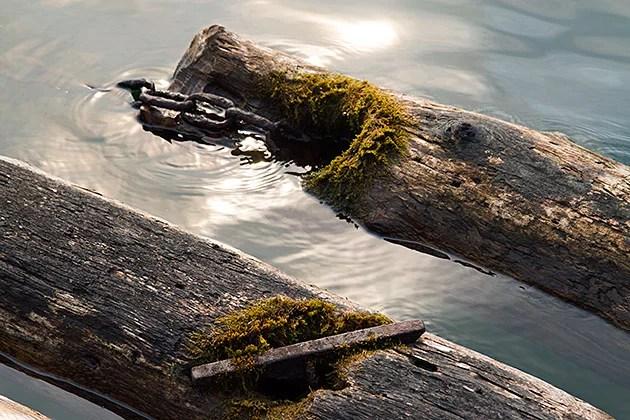 Log Fishing