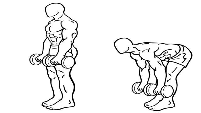 Benefits of free weight exercise Dumbbell Romanian Dead-lift