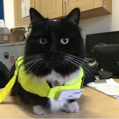 This Cat Got Promoted