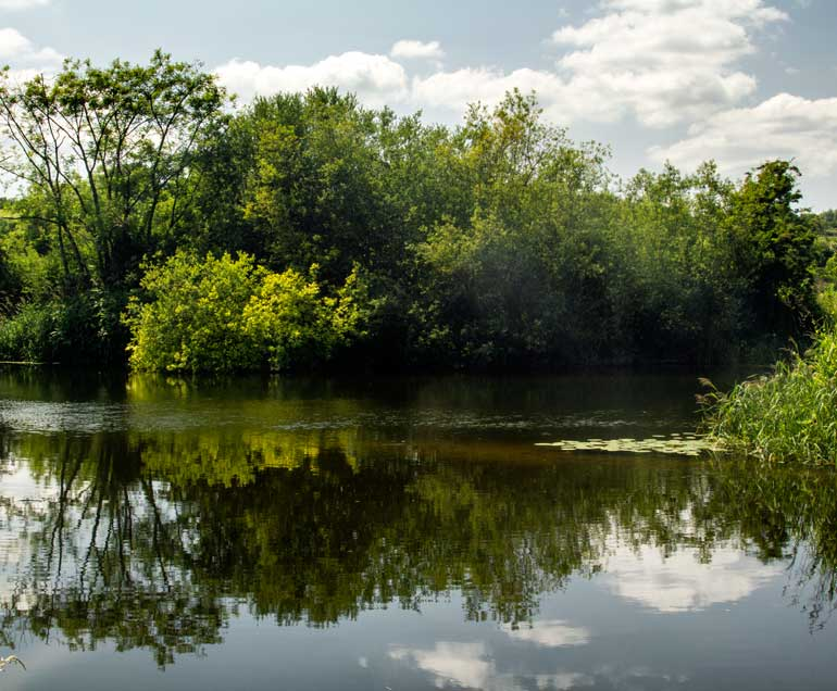The River Barrow near Ballytiglea Borris carlow
