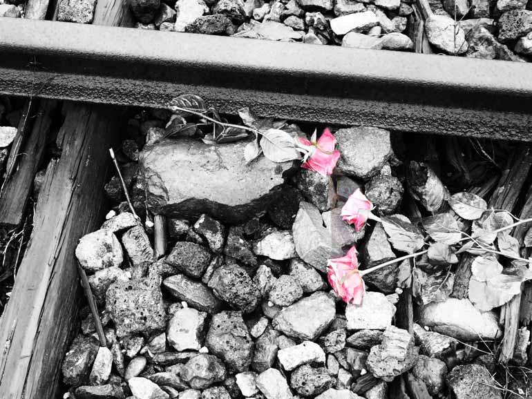 Floral tribute: Railway track, Auschwitz II - Birkenau