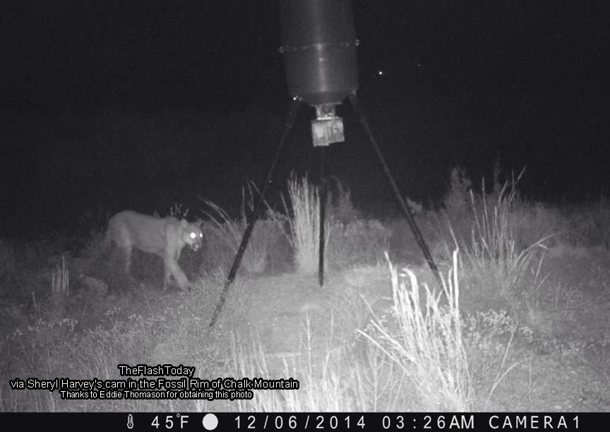 Rainbow, Texas resident Eddie Thomason may have caught a mountain lion on his game camera, but was it the one taken by Wes Monk? Maybe it was the same cat or maybe not, as Erath and the surrounding counties have all had numerous reports of big cat sightings.