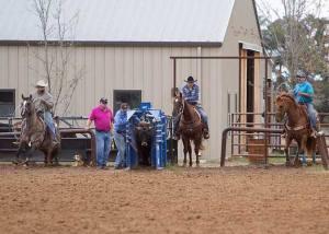 Crawford vet rodeo 10