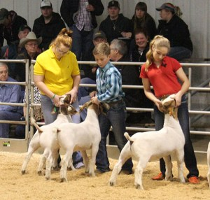 Friday Stock Show 12