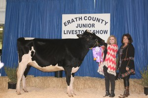 The grand champion from the dairy selling division was this senior yearling heifer shown by Alyson Phillips and purchased for $7,000 by Erath County Dairy Sales and ABF Packing.