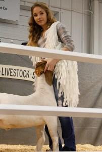 Stock Show Auction 10
