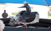 Bruner Rodeo Spectacular 03