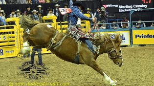 Sterling Crawley, shown above in the 2016 National Finals Rodeo, won the saddle bronc riding at the Walla Walla Frontier Days in Walla Walla, Washington over the weekend.    Courtesy DUDLEY BARKER/dudleydoright,.com