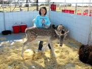 Great American Petting Zoo 3
