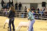 Stock Show (day 2) IMG_0743