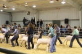 Stock Show (day 2) IMG_0747