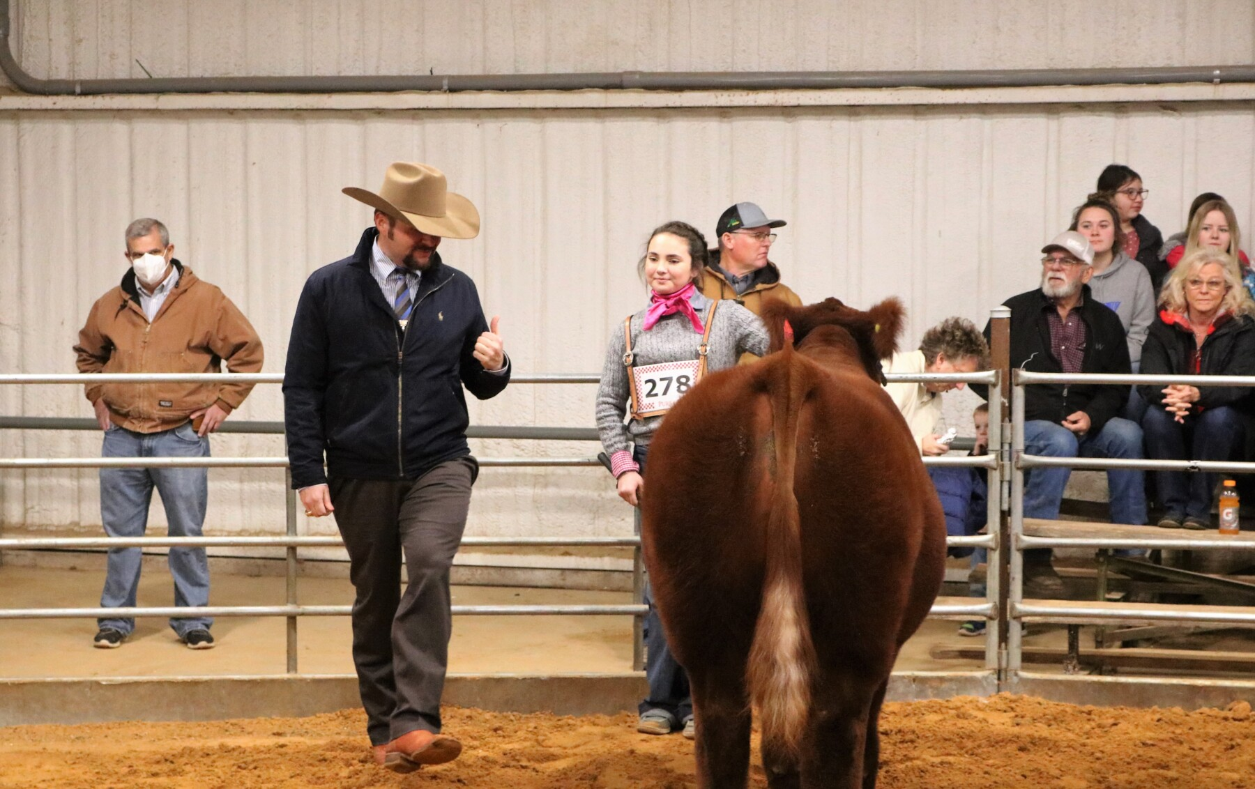 Beef-Cattle-Show-4