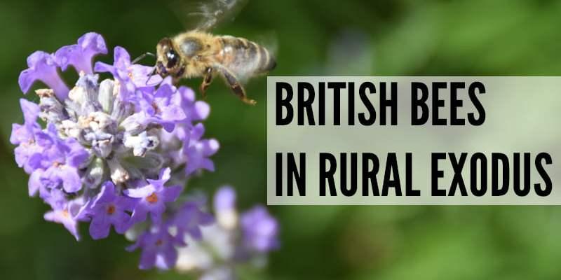 British Bees In Rural Exodus