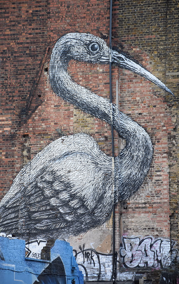 bird-graffiti