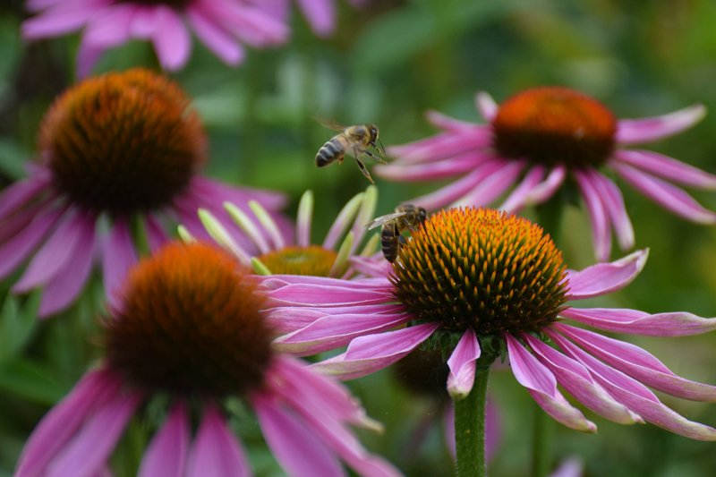 state-of-nature-bee