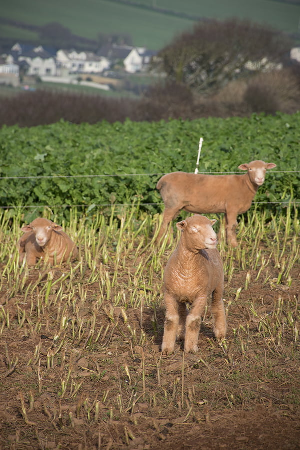 Earth Day Animal Farming