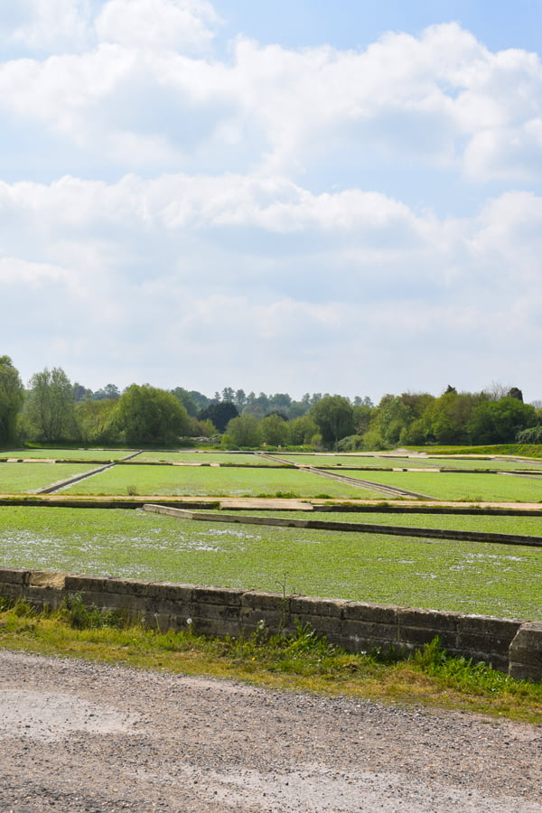 The Watercress Farm