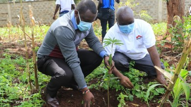 Photo of Equity Ngara Branch and Interior Ministry Plant Trees at Mathari National Teaching and Referral Hospital
