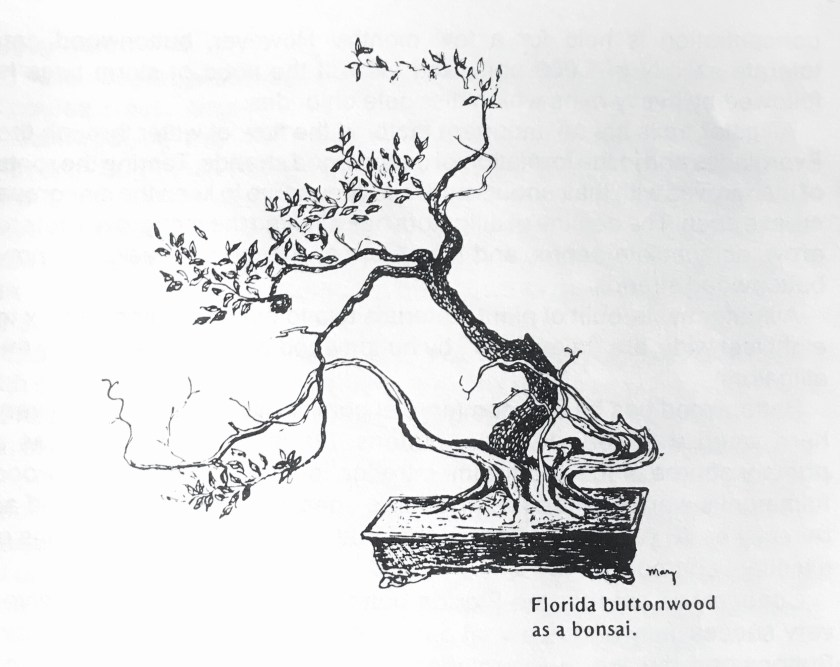 The Florida Bonsai Magazine – Presenting Florida Bonsai to the World