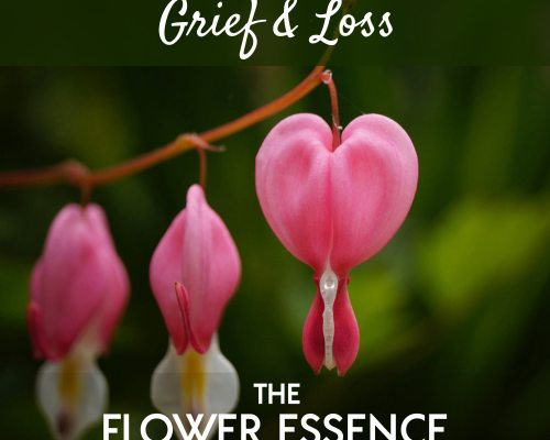 FEP07 Grief and Loss