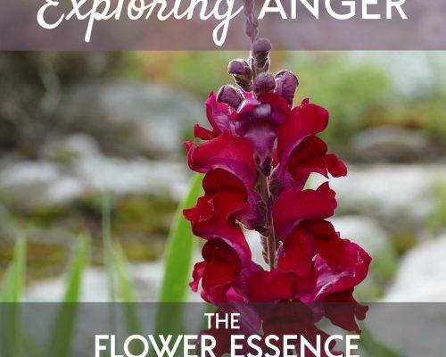 FEP21 Exploring Anger