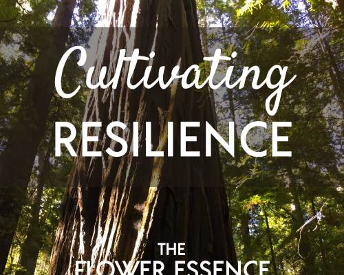 FEP29 Cultivating Resilience
