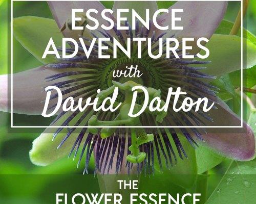 FEP37 Essence Adventures with David Dalton