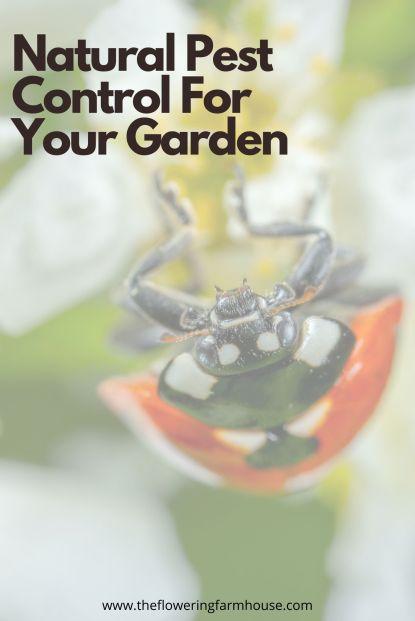 keep your garden pest free