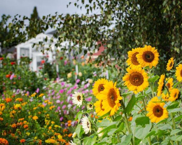 1st year flower farmer flower field