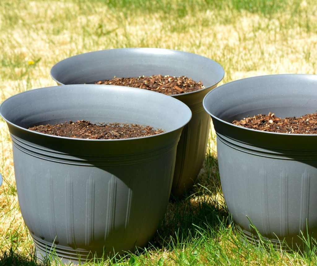 growing flowers in container pots