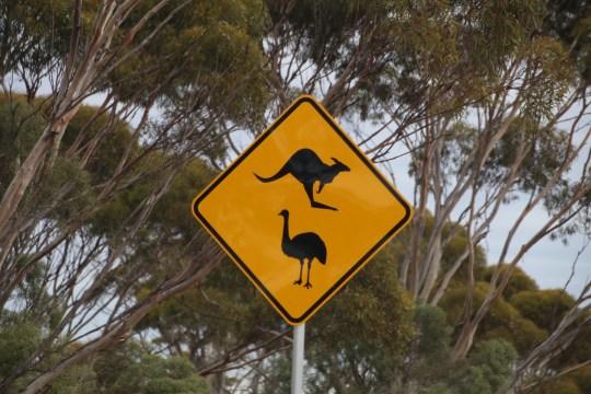 kangaroo and emu sign
