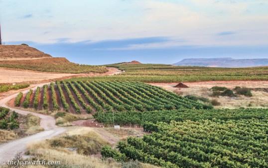Vineyards with mesa