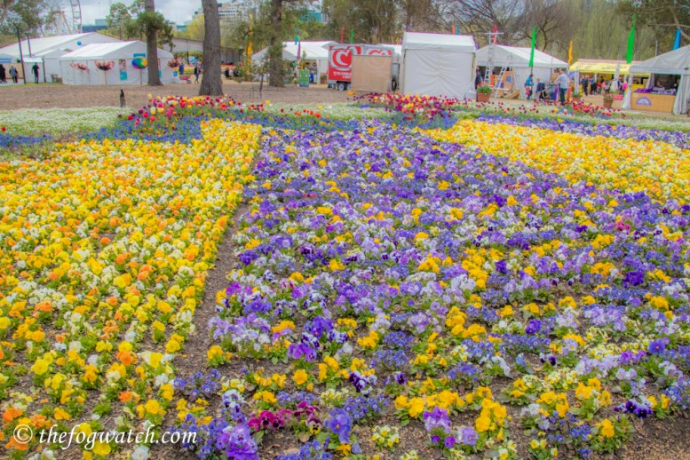 Floriade flower beds