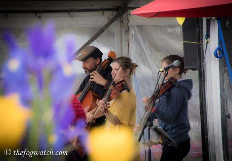 String Family Band at Floriade