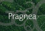 Pragnea [6 Fonts]