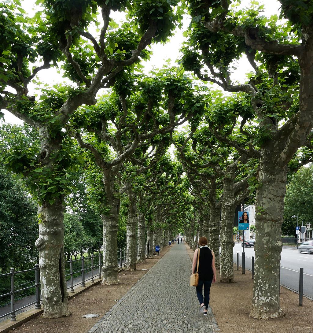 Walk to Sachsenhausen 24 Hours in Frankfurt.The Food Girl in Town