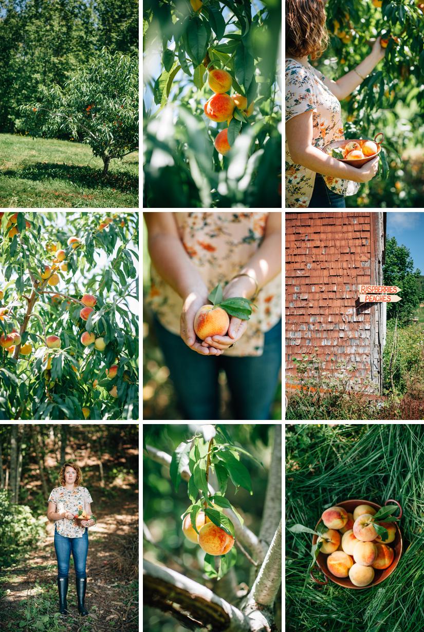Peach Orchard 3