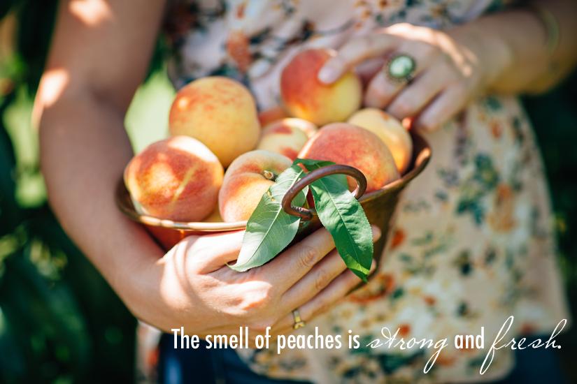 Peach Orchard 8