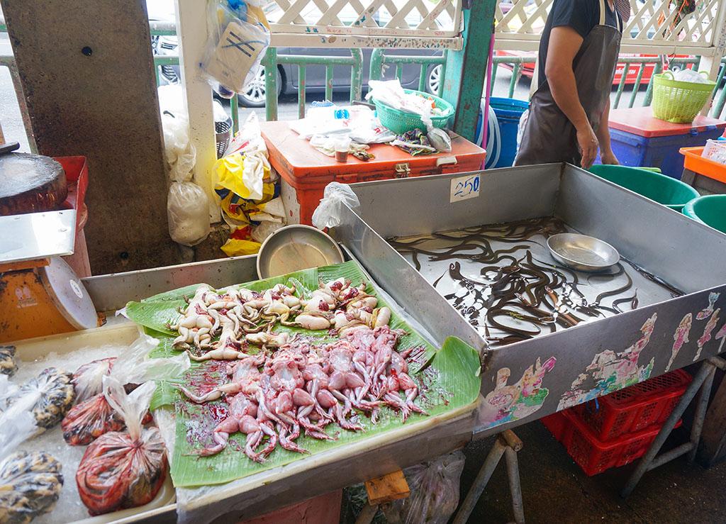 Frogs in Klong Toey Slum Bangkok