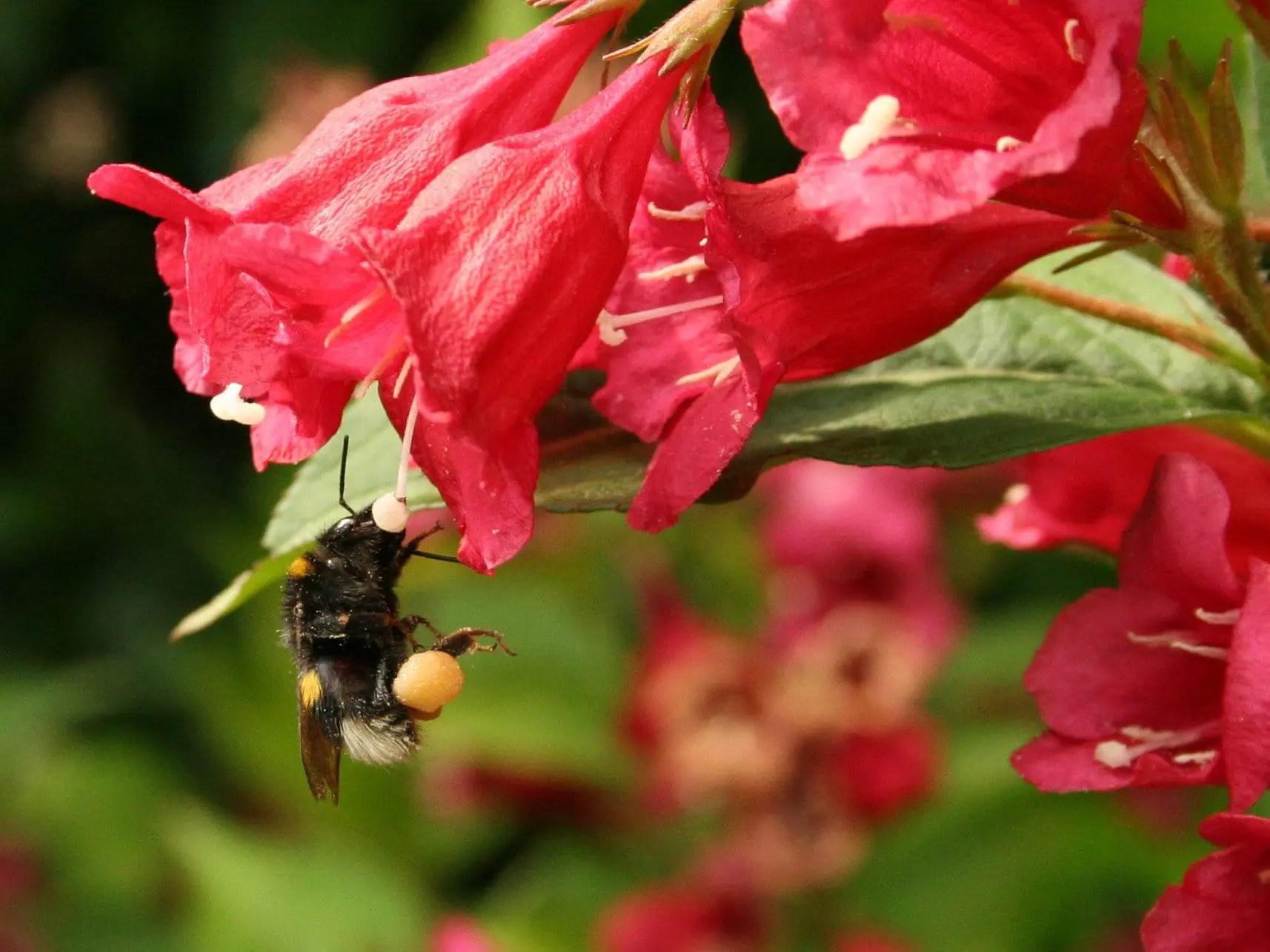 Flower representing endometriosis