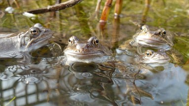 Happy, hopeful March frogs