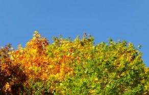 leaves_turning