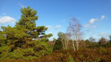 surrey_heathland