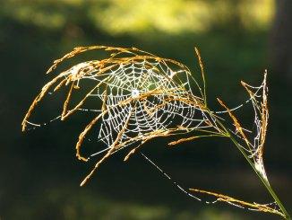 grass_web